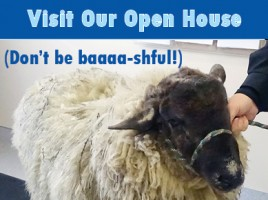 Open House 17 sticky