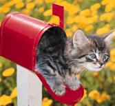 Cat_mailbox_clipart