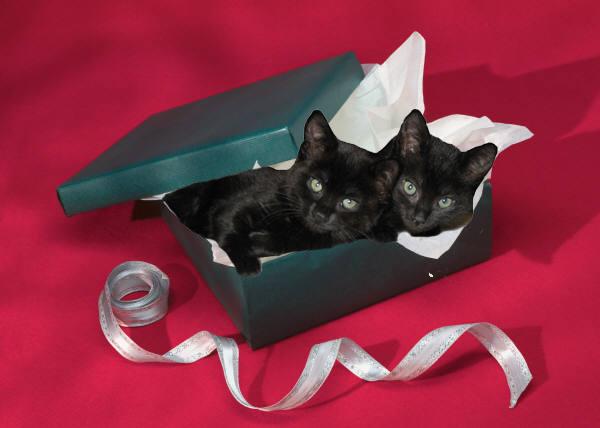 Kittens in gift