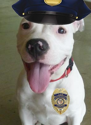 License Your Pets – It's The Law!